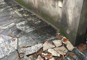 Radici dei tigli invadono il cortile, professionista fa causa al Comune