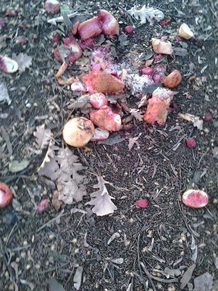 Giardini Margherita, allarme bocconi avvelenati: topi e piccioni morti