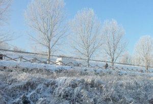 """Notte di gelo, """"galaverna"""" in città. Neve in arrivo in serata, ma solo in collina"""