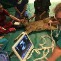 Pronto soccorso per animali selvatici senza finanziamenti: stop a recupero e trasporto