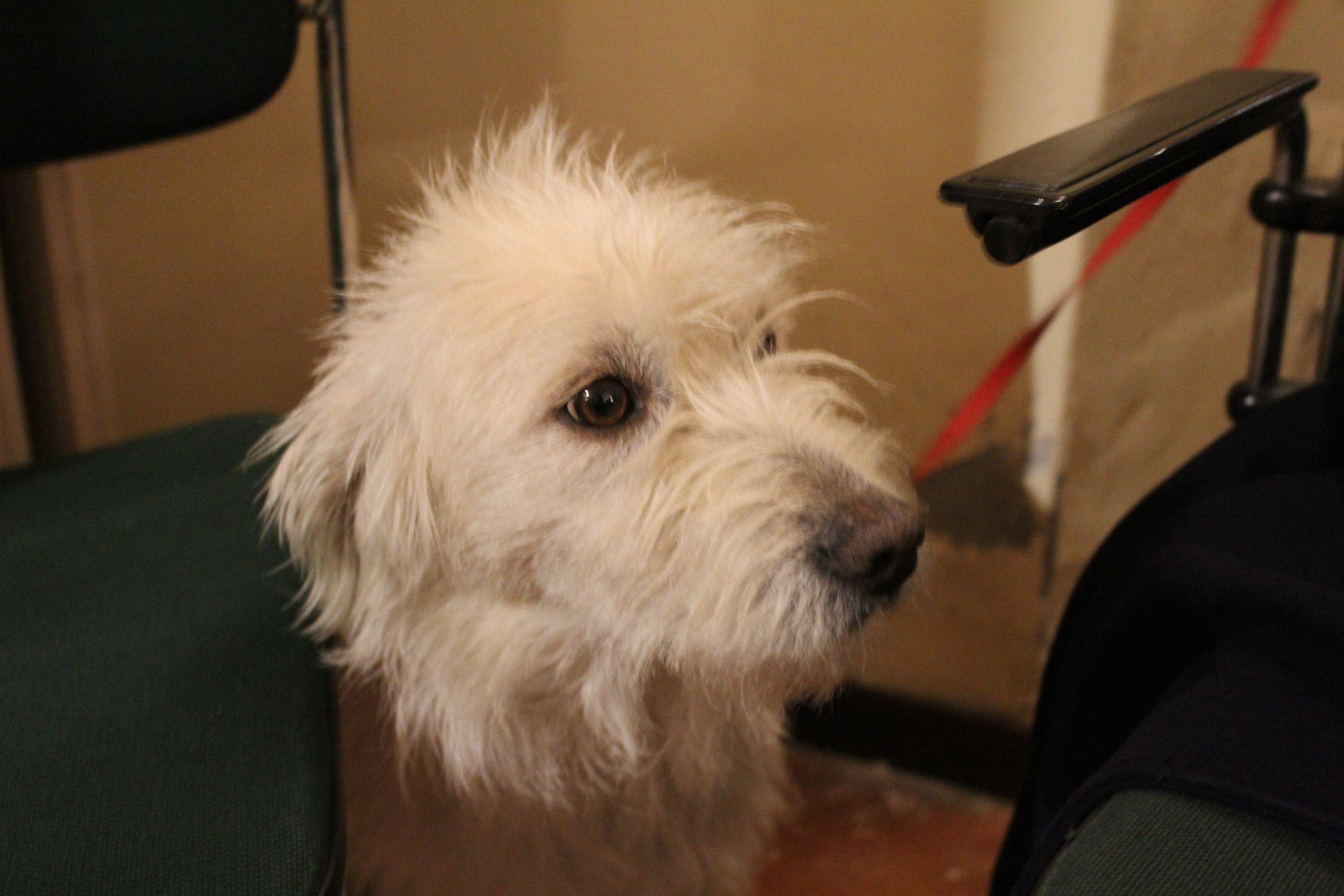 In consiglio comunale arriva una cagnolina e scoppia il caso