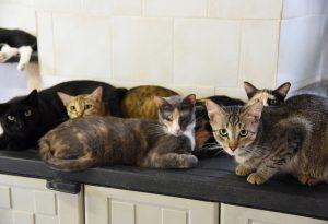 Colonia felina sterminata, i gatti di nonna Linda sono rimasti solo dieci