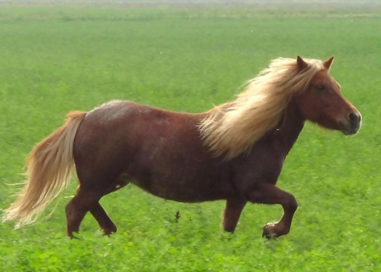 Traffico nel caos: due cavalli liberi sulla Provinciale in Val Tidone