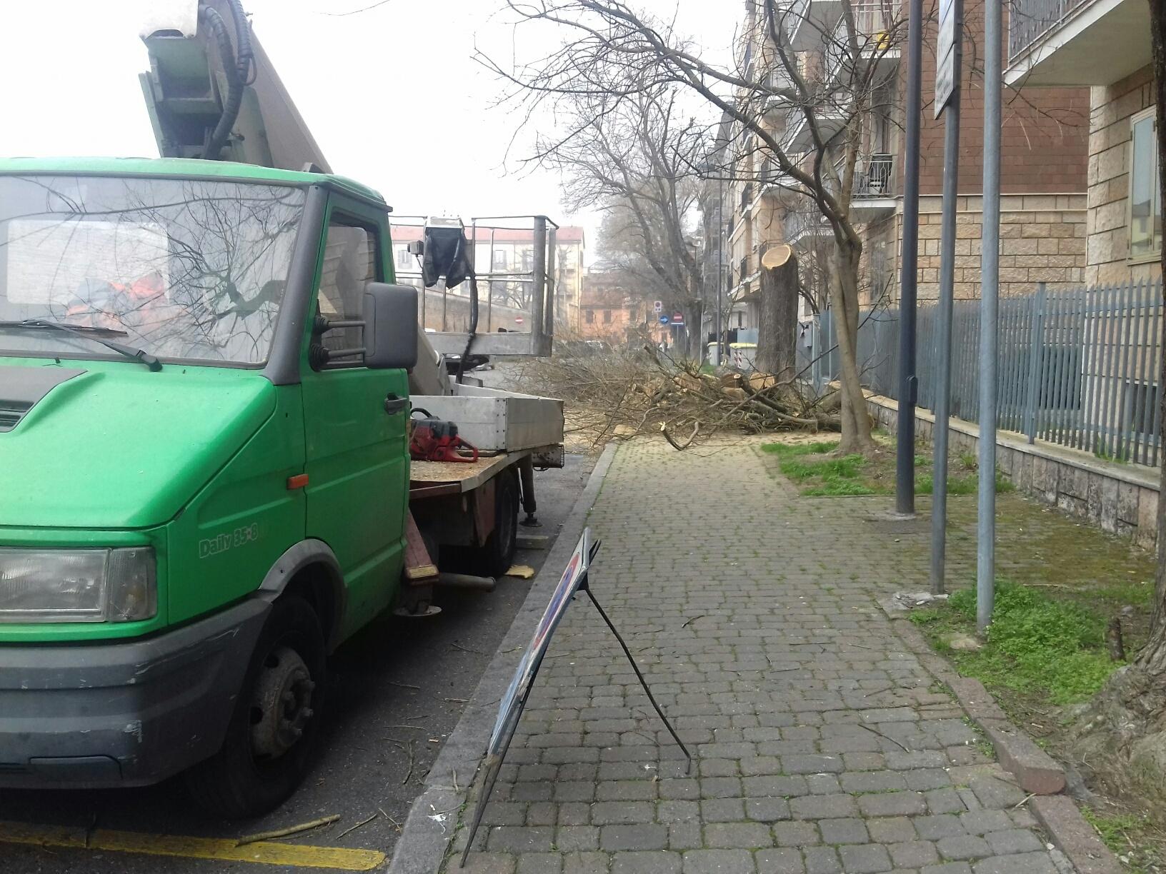 """Acero Radici Invasive alberi, nuovi abbattimenti. il comune: """"troppi danni"""