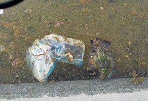 Stazione, rifiuti e un piccione morto galleggiano nella fontana