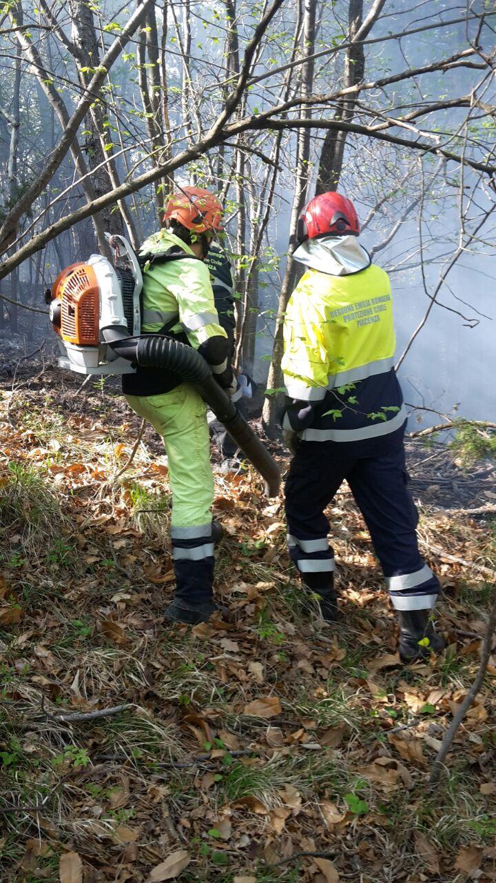 Incendio in pineta, continua l'intervento in una zona impervia
