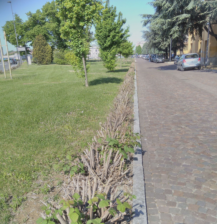 #degradopiacenza – Rami secchi al posto degli oleandri all'ingresso del cimitero