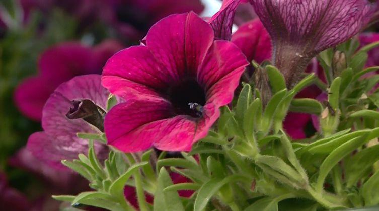 Misure anti-covid, Coldiretti: 'via libera a vendita di piante e fiori'