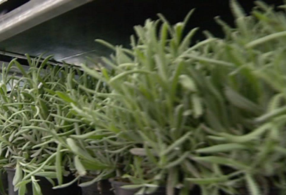 Piante aromatiche i segreti per coltivarle sul balcone di - Piante aromatiche in casa ...