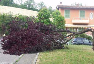 Che rischio a Lugagnano: un albero si spezza in due e precipita sul marciapiede