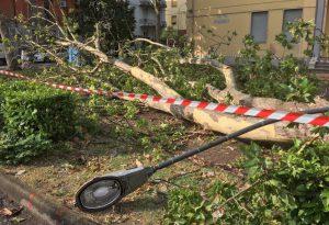 Alberi sradicati e allagamenti: il maltempo si abbatte su Piacenza e provincia