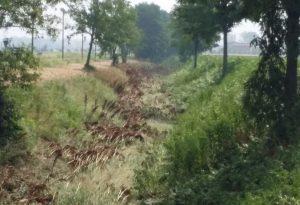 """Coldiretti: """"La pioggia non ha ridotto la siccità"""". Consorzi di bonifica: """"Vicini alla catastrofe"""""""