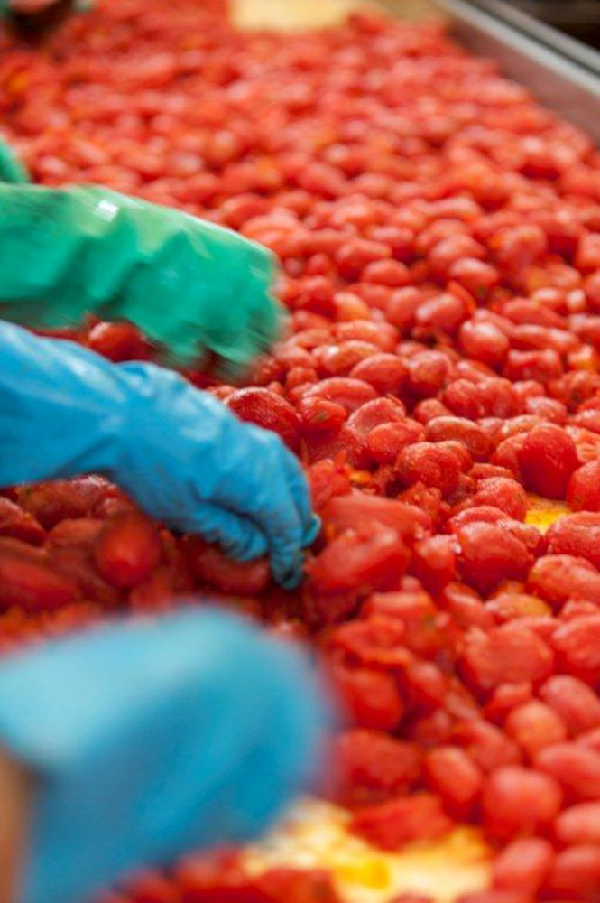 Al via la campagna del pomodoro: buona qualità, 3mila addetti impiegati