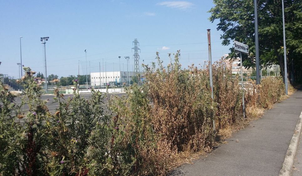 Ciclabile contro un muro piante infestanti alte un metro - Piante alte da giardino ...
