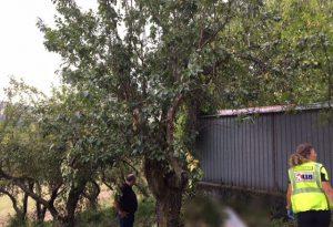 Cade da un albero, infilzato da un attrezzo agricolo: morto 75enne