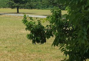 Atti osceni ai giardini pubblici, denunciato anziano di 77 anni