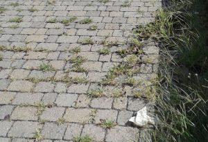 Vicolo del Guazzo: erbacce e rifiuti abbandonati