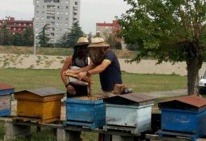 Gelo e siccità: annata disastrosa per il miele, produzione -70%