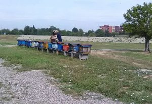 """Calano le fonti di nettare, Associazione apicoltori: """"Creare pascoli apistici"""""""