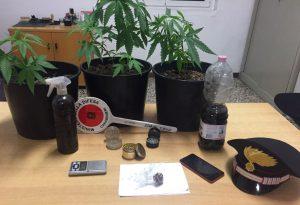 Droga addosso e piantine di marijuana in casa: 25enne arrestato