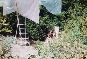 In giardino 20 piante di marijuana: operaio di 50 anni arrestato a Monticelli