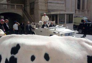 """La vitella Lou donata al Papa. L'allevatore: """"Una emozione unica"""""""