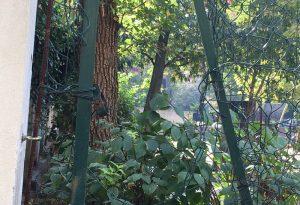 Giardini Padre Gherardo: di giorno frequentati dai bambini e la notte rifugio per tossicodipendenti