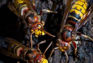 Shock anafilattico per la puntura di un'ape, sessantenne all'ospedale