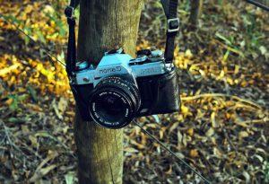 """Con la macchina fotografica """"cattura"""" i lupi: la storia di Paolo"""