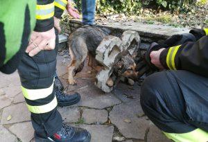 Resta incastrato nel blocco di cemento: cane liberato dai vigili del fuoco