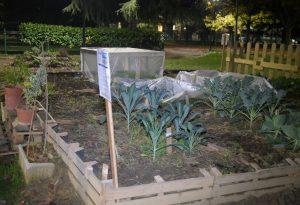 Via Serravalle Libarna, orto urbano  più rigoglioso grazie agli agronomi