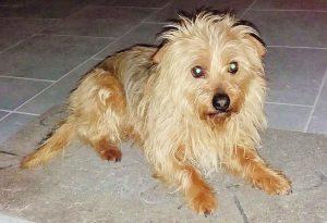 Sdegno a Saliceto: il cagnolino Lucky colpito a morte da un colpo di carabina