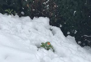 Neve e gelo nel Piacentino, è allerta alta; rischio sulle autostrade MANDATE LE VOSTRE FOTO
