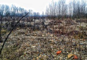 """Un bosco nel greto del Tidone in secca: """"Grave pericolo in caso di alluvione"""""""