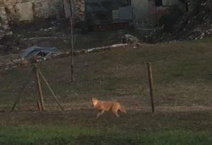 Mentre attende l'arrivo dello scuolabus, si ritrova il lupo in giardino