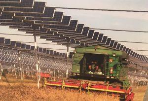 """Agrovoltaico, il primo agricoltore al mondo: """"Buoni risultati"""""""