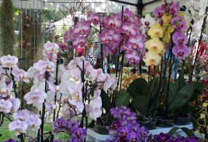 Le foto più belle di Floravilla, mostra mercato di piante e fiori