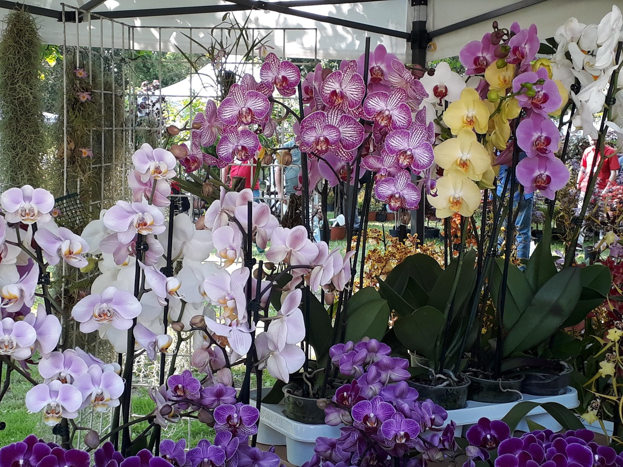 Immagini Piante E Fiori le foto più belle di floravilla, mostra mercato di piante e