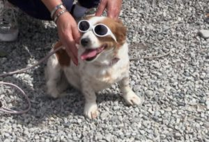 Sensibilizzazione contro gli abbandoni, passeggiate e stand: è il Dog Festival