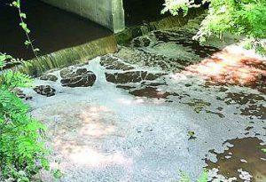 Villanova, sversamento di liquami nell'Arda. Moria di uccelli, pesci e gamberi