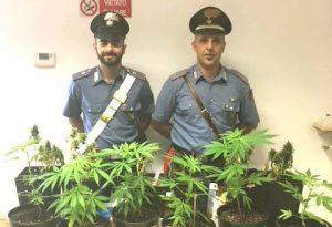 In casa aveva 12 piante di marijuana: 39enne denunciato per coltivazione di stupefacenti