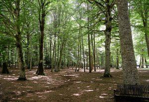 Ambiente: la Regione investe 5,5 milioni di euro per la fruizione del verde da Piacenza a Rimini