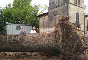 """Crolla il cedro secolare di Ganaghello. I residenti: """"Era il simbolo del paese"""""""