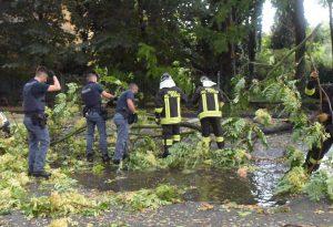 Temporale poderoso anche in città: crolla un albero, chiusa via Palmerio. FOTO