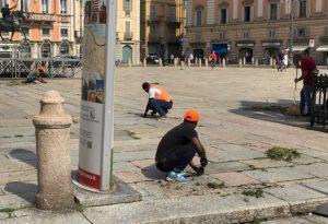 Rimozione delle erbacce in piazza Cavalli, all'opera i richiedenti asilo volontari