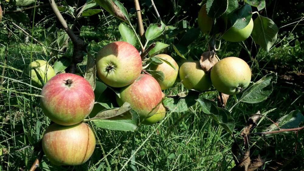 Mele, castagne e zucca, i frutti dell'autunno nella dieta consigliata da #ricettainsalute