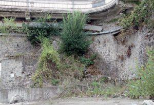 Piante e arbusti nell'alveo del Nure e tra le crepe dei piloni del ponte: cittadini allarmati a Bettola