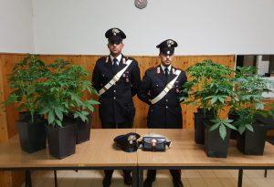 Nel soppalco di casa i carabinieri trovano una piantagione di marijuana: operaio arrestato