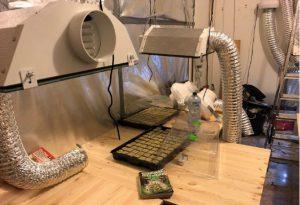 In casa una serra di marijuana, arrestato 22enne. Oltre 100 clienti