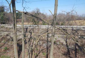 """Alberi pericolosi che """"minacciano"""" la ferrovia e rifiuti abbandonati"""